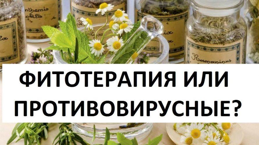 Противовирусные травы против гриппа и простуды купить