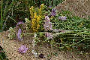 Травы проти гриппа и простуды купить