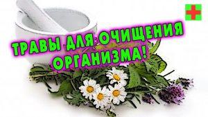 Травы для очищения организма купить в Красноярске